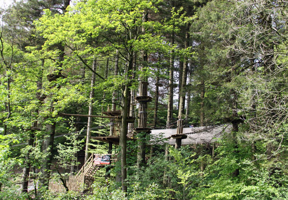 Go Ape in Grizedale Forest, Cumbria